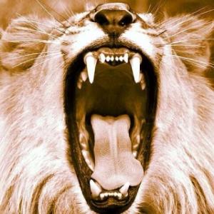 lion 1.jpg