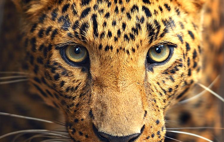AnimalMattersThumb.jpg