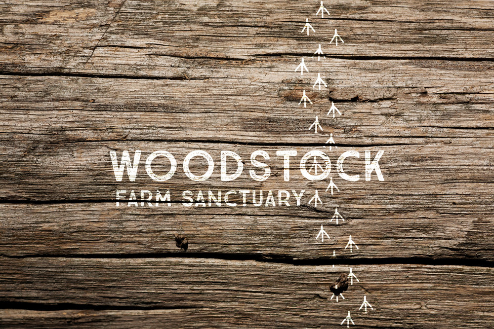 Woodstock-Farm-Sanctuary-Logo-Brand-Identity-Design.jpg