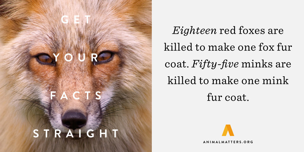 Animal-Matters-Fox-Fur-Fact.jpg