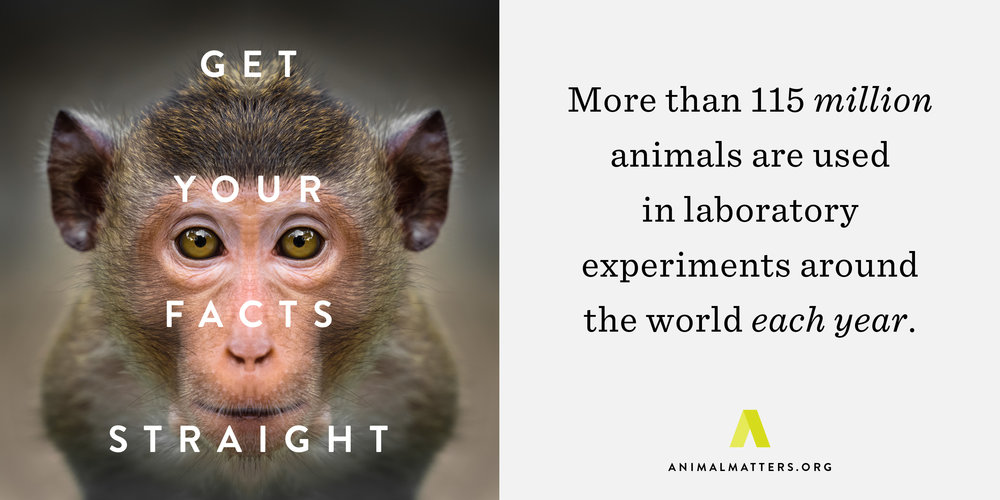 Animal-Matters-Lab-Monkey-Fact.jpg