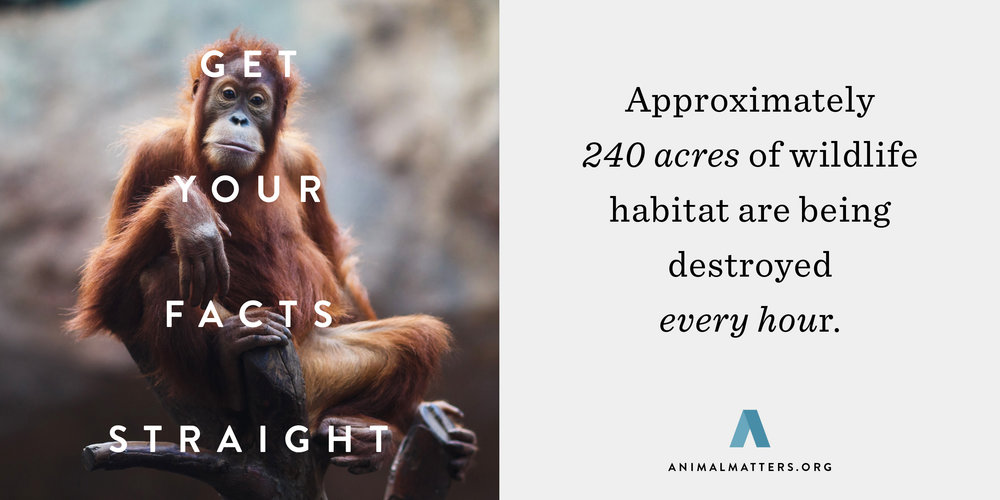 Animal-Matters-Orangutan-Habitat-Fact.jpg