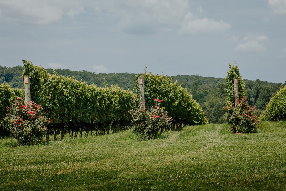 010-stone_bridge_winery_engagement_proposal.jpg