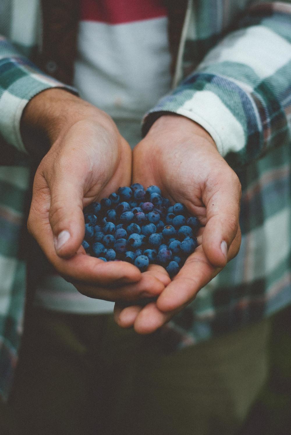 Foraged Blueberries