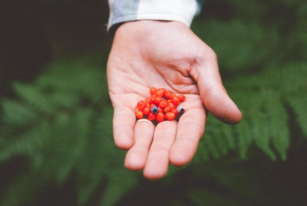 Wild Foraged Berries