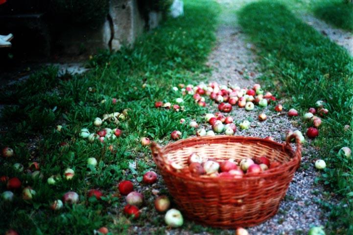 Jablkový večer v Pane&Olio, FoodCult