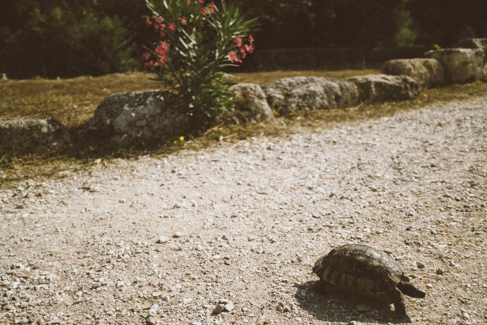 Steinbeck's Turtle