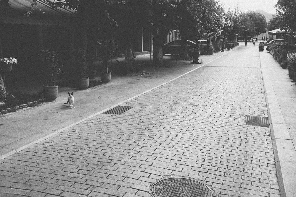 Street Shot I