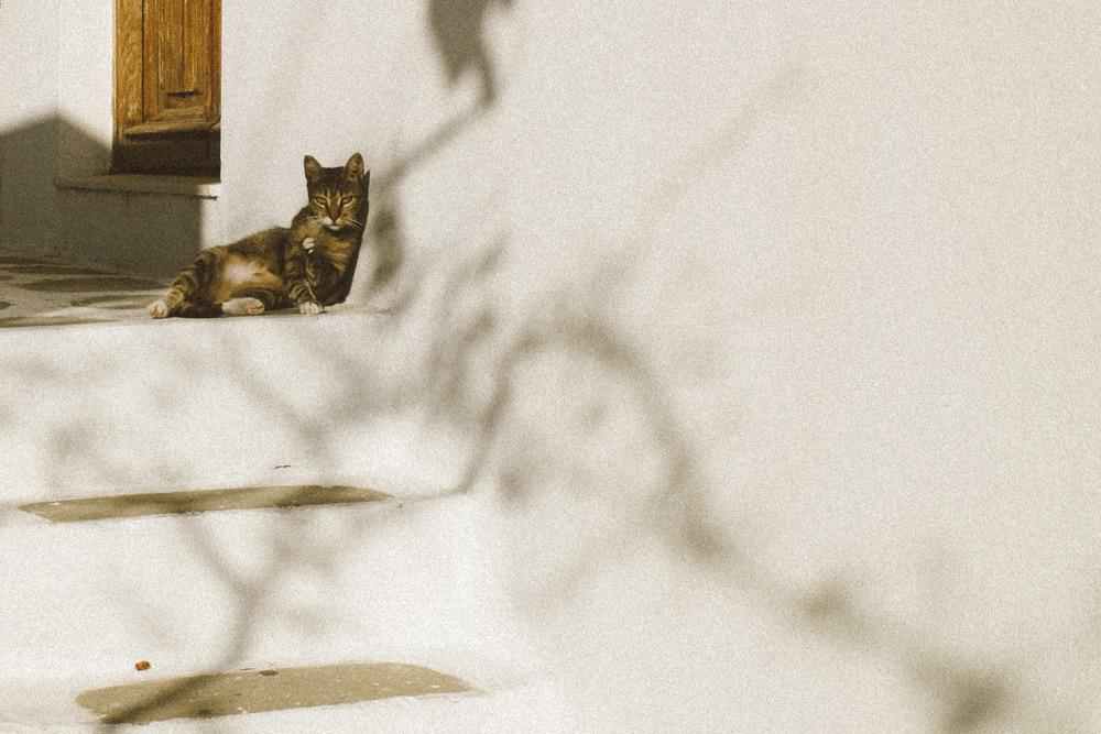 Kitty in Heat