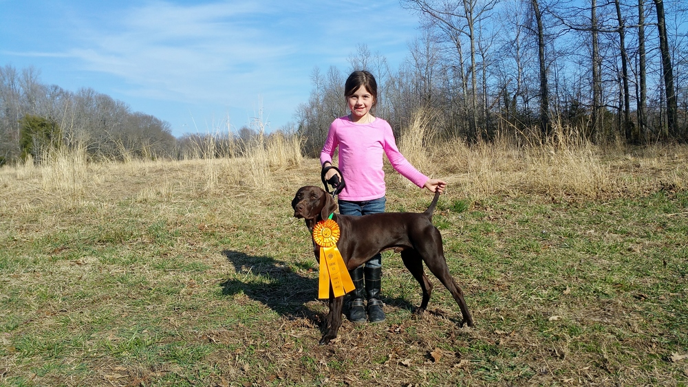 Lily Handled Liv in his first hunt test this weekend and with scores of 9's and 10's this duo seems to be a couple to watch!.