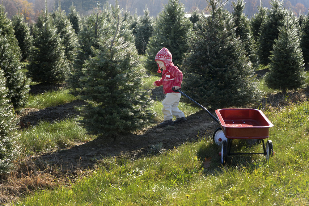 Christmas tree farm sessions set for November! (Typically sell out by September!)