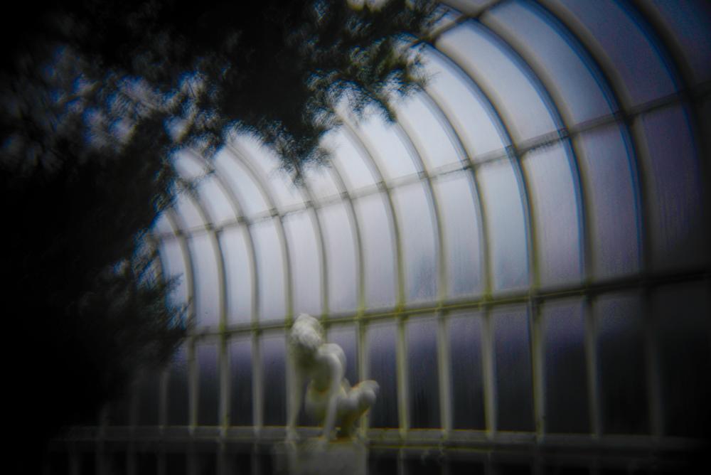 botanic gardens holga (4 of 16).jpg