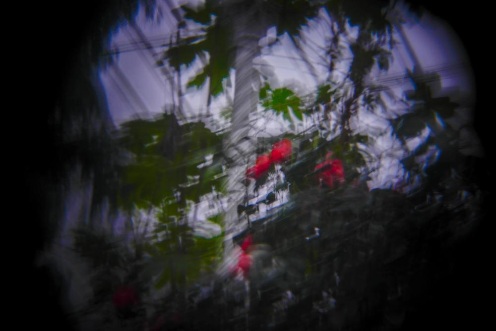 botanic gardens holga (5 of 16).jpg