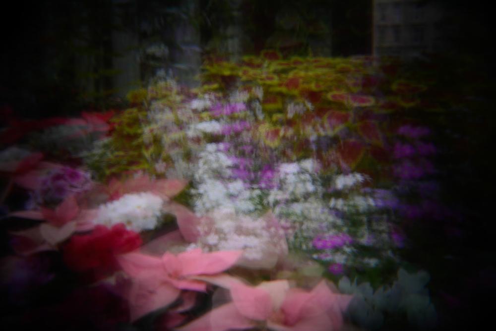 botanic gardens holga (8 of 16).jpg
