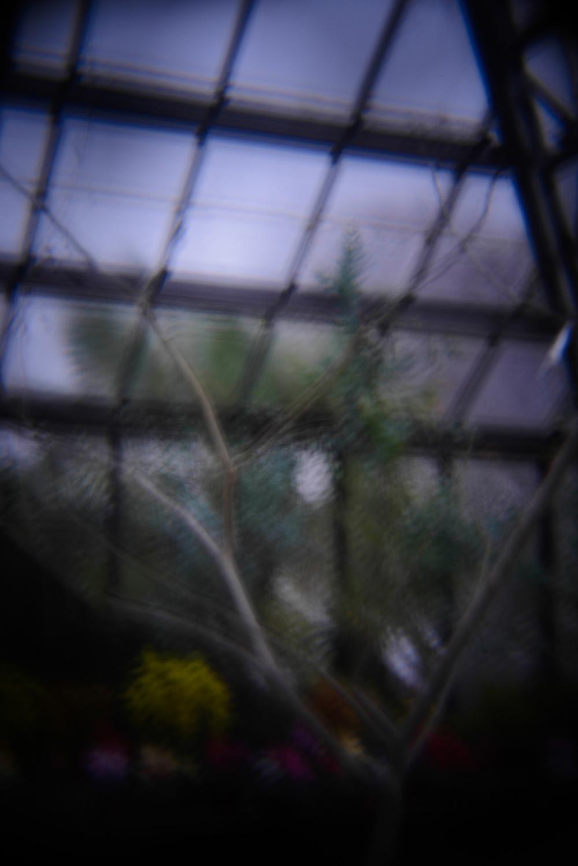 botanic gardens holga (9 of 16).jpg