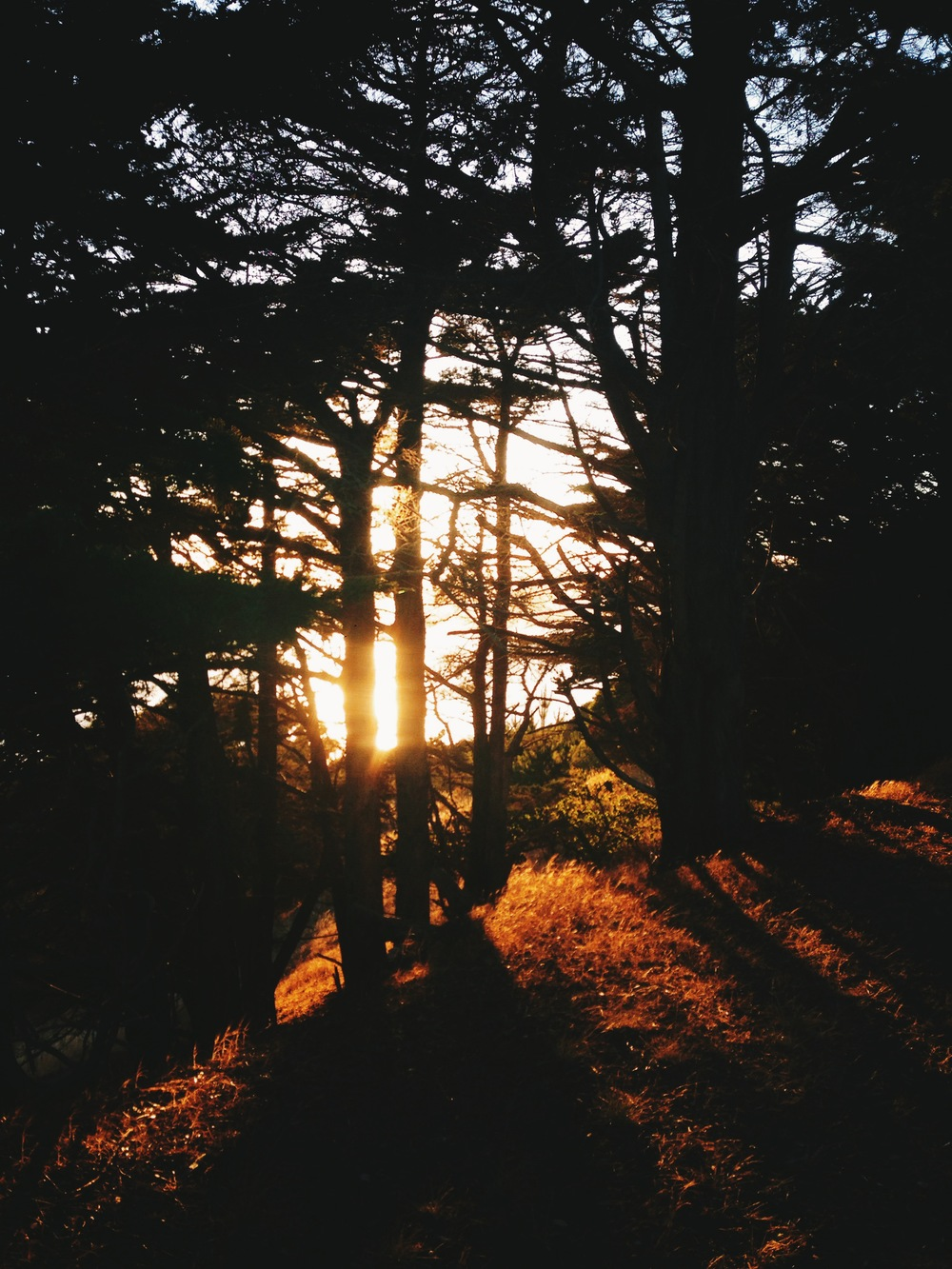 Sun through the trees, Angel Island