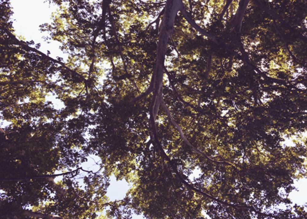 utah summer trees2.jpg