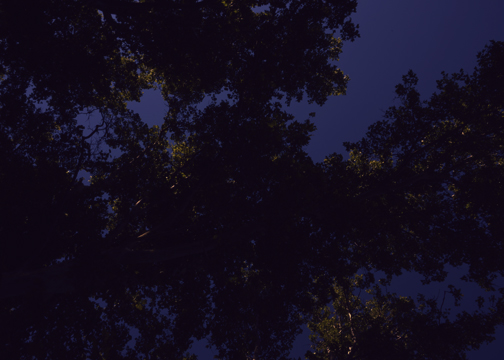 utah night trees 2.jpg