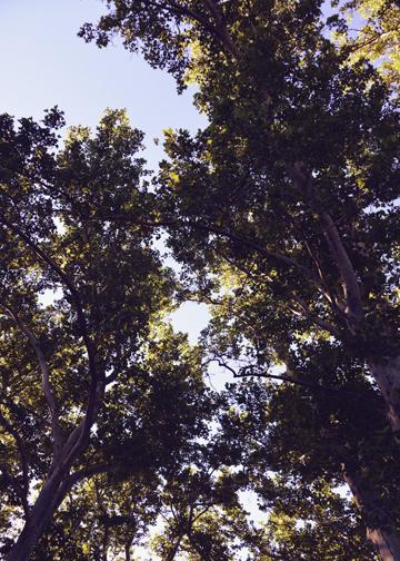 utah summer trees.jpg