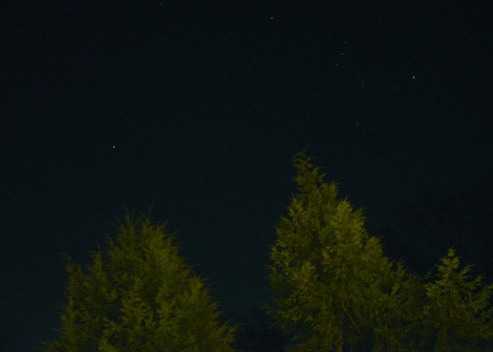 nightskytrees2.jpg