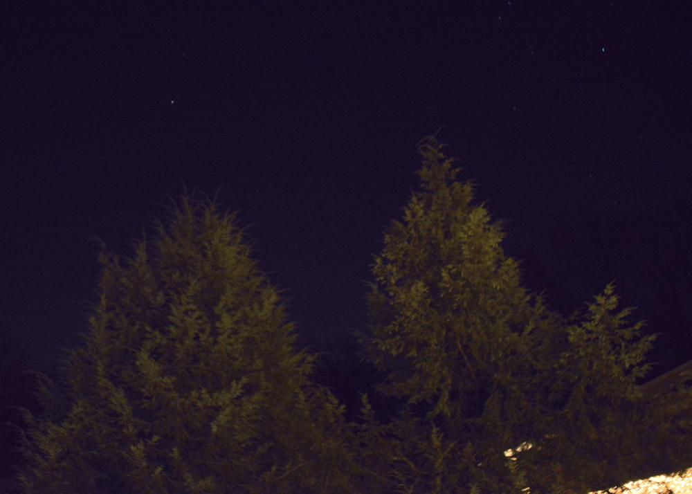 nigthskytrees3.jpg