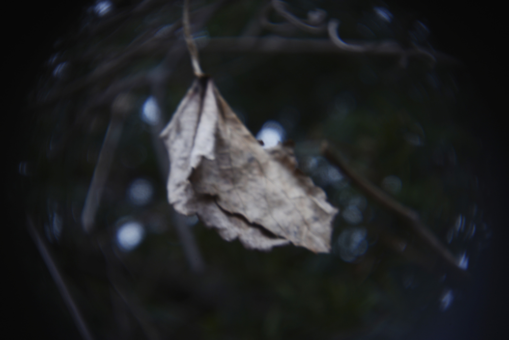 glen echo holga lens leaf.jpg