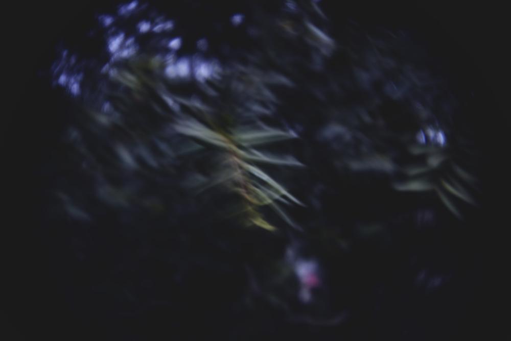 glen echo holga lens.jpg