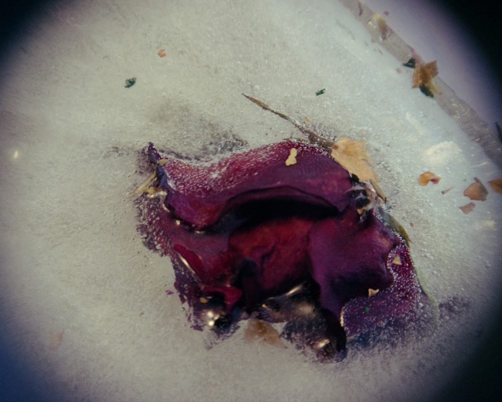 frozen flower_35.jpg