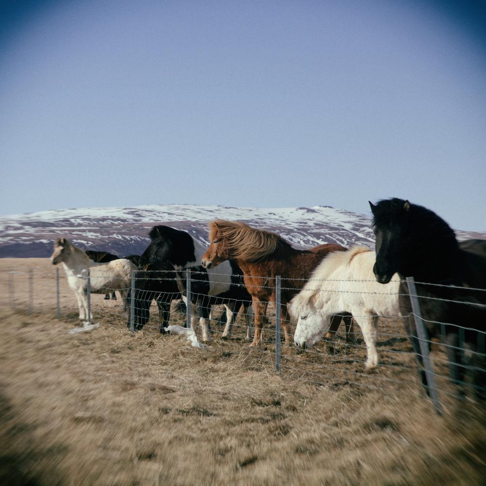 iceland landscapes-73.jpg