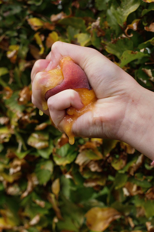 peaches-67.jpg