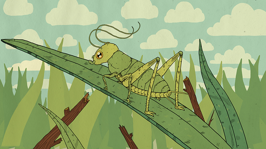 Wild-Safari---Antennae.jpg