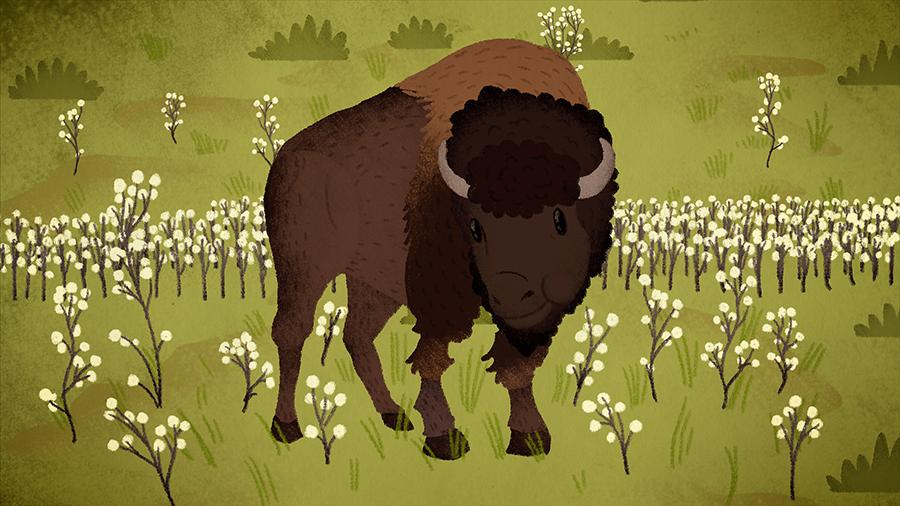 Riding-the-Range---bison.jpg