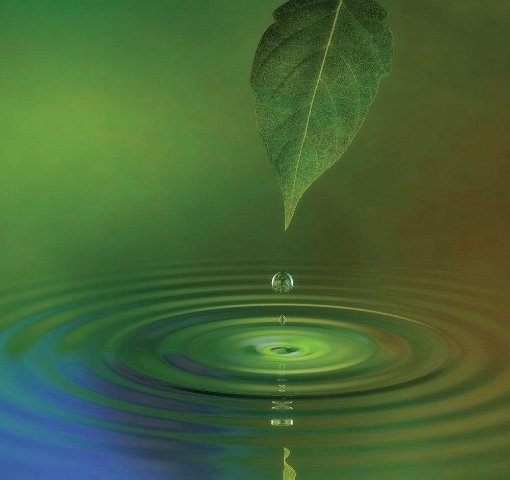 Fotolia_3575436_leaf full page.jpg