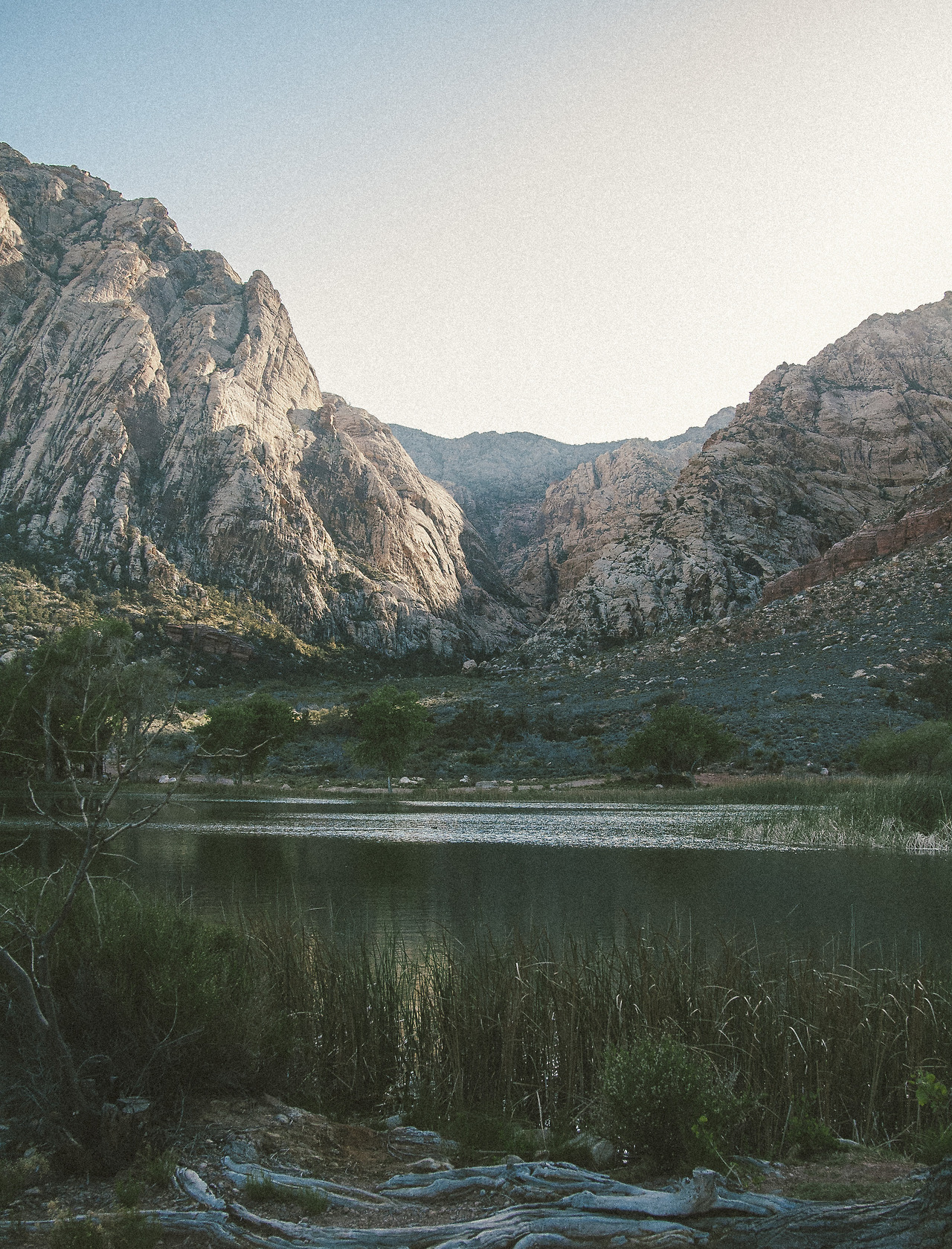 lensblr-network :     Spring Mountain Ranch State Park   by  Matt Walker    ( filmandforests.com )