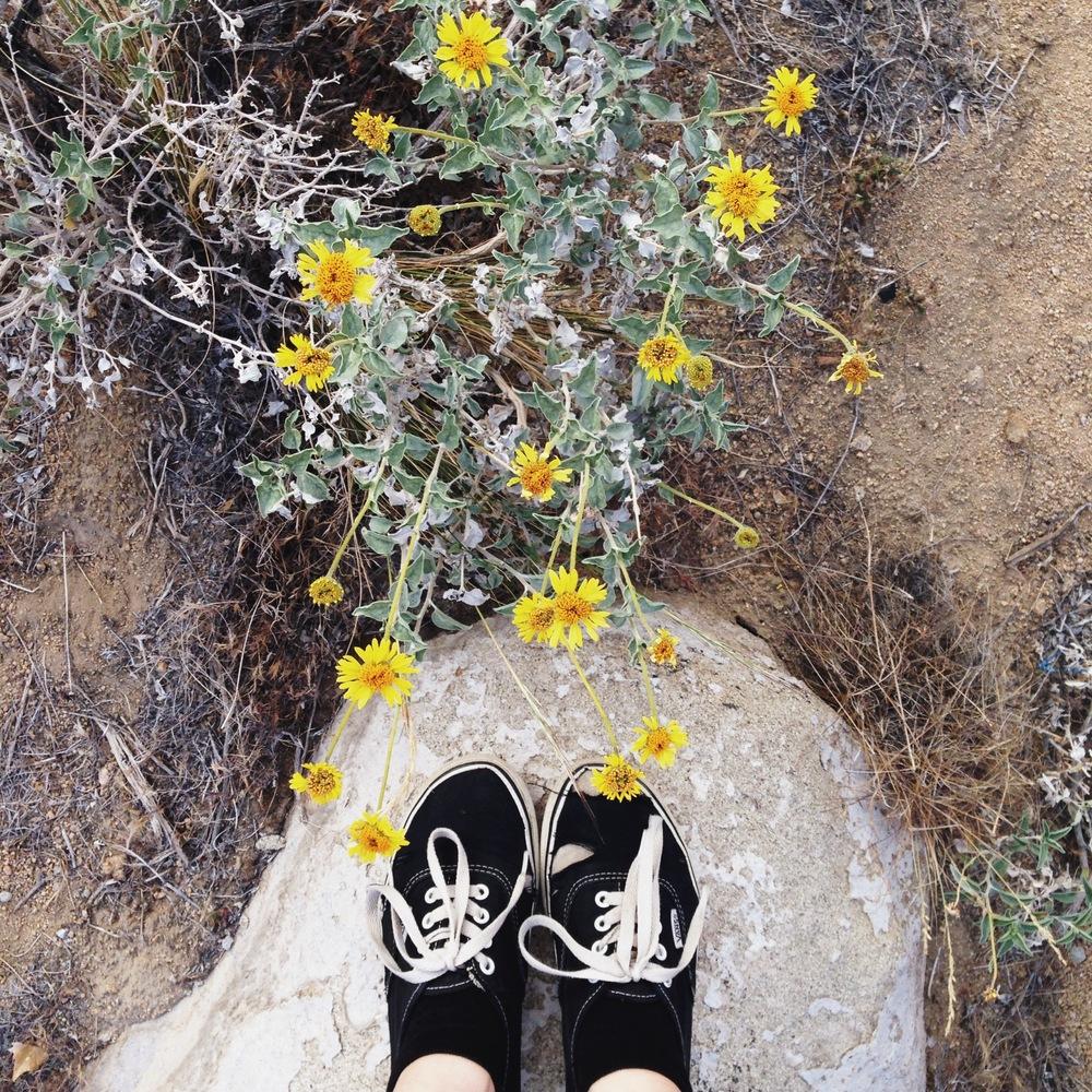 20140419 Desert Walk-102.jpg