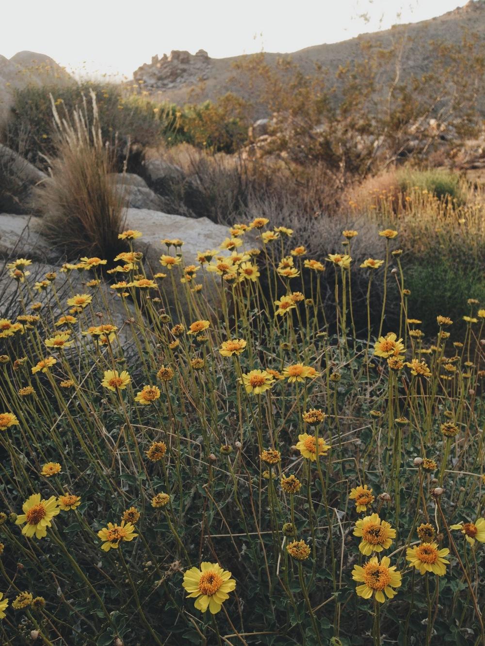 20140419 Desert Walk-103.jpeg