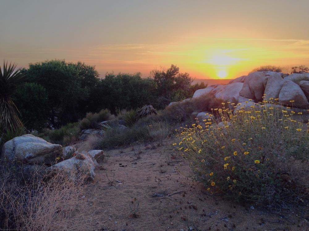 20140419 Desert Walk-116.jpg