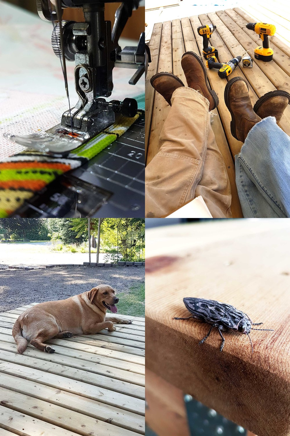 Working on our personal touches...we aren't the only ones who enjoy the deck, as we've had some random visitors show up!