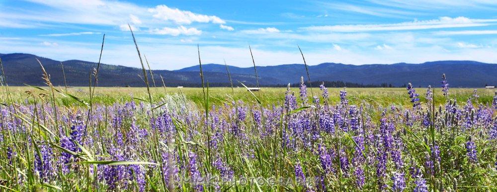 Montana in June.