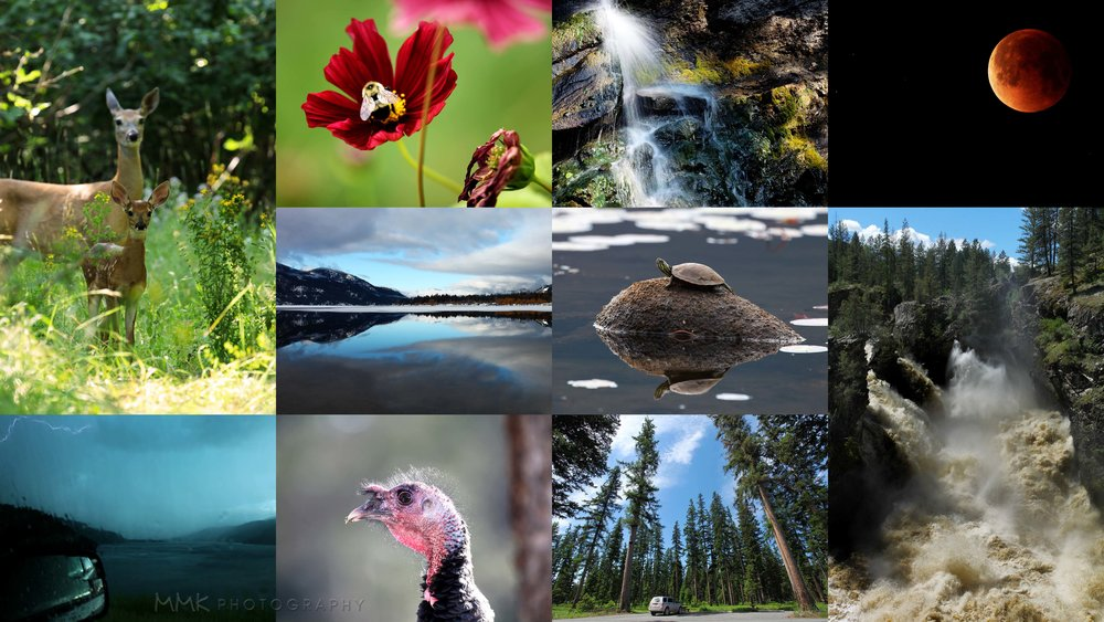 What 2018 looked like in ten frames… lots of wildlife, landscapes, and water!