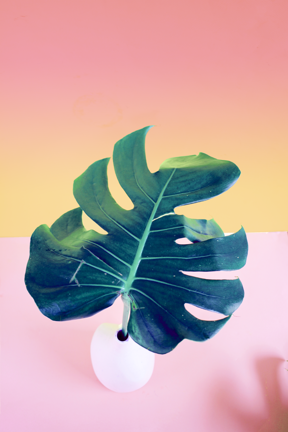 Tropical Leaf Print_01_FINAL.png