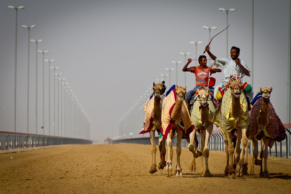 Dubai_Camel_Tracks-001.jpg