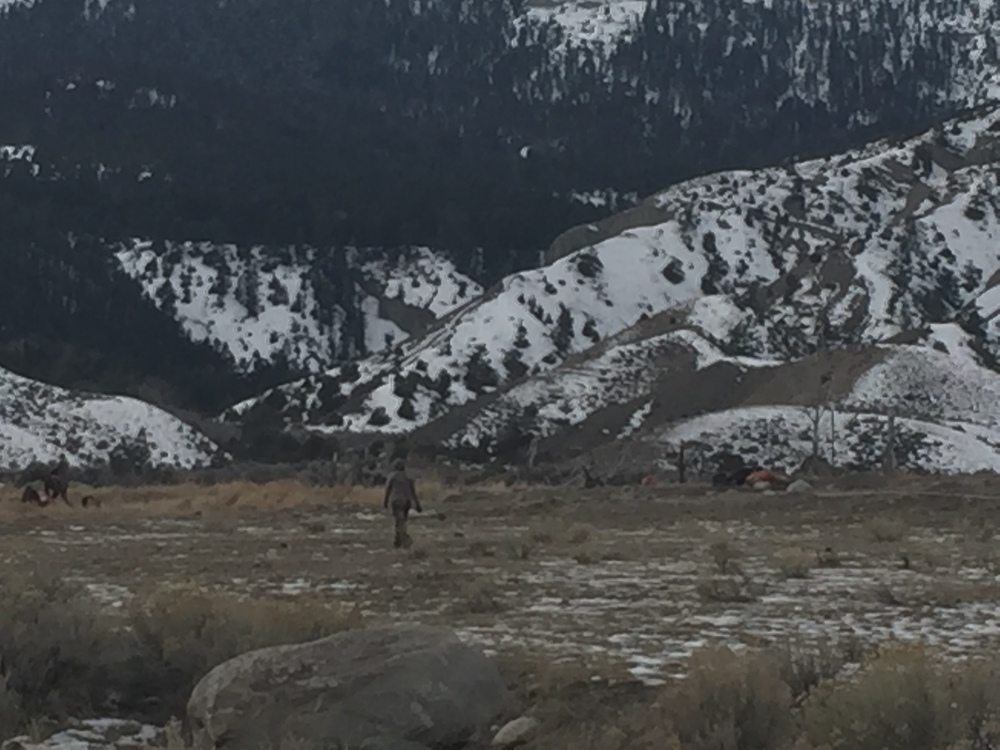 Hunters in Beattie Gulch clean the bison they just shot. For most of the Native American hunters, the meat will be returned to the tribe and shared among the community.