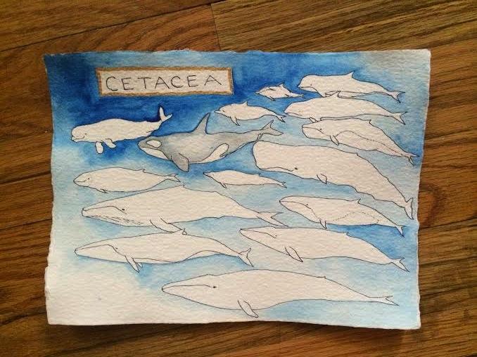 whales make me :)