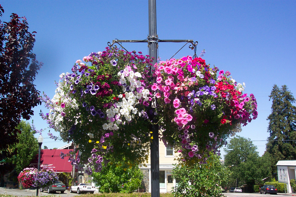 Hanging Baskets 1.jpg