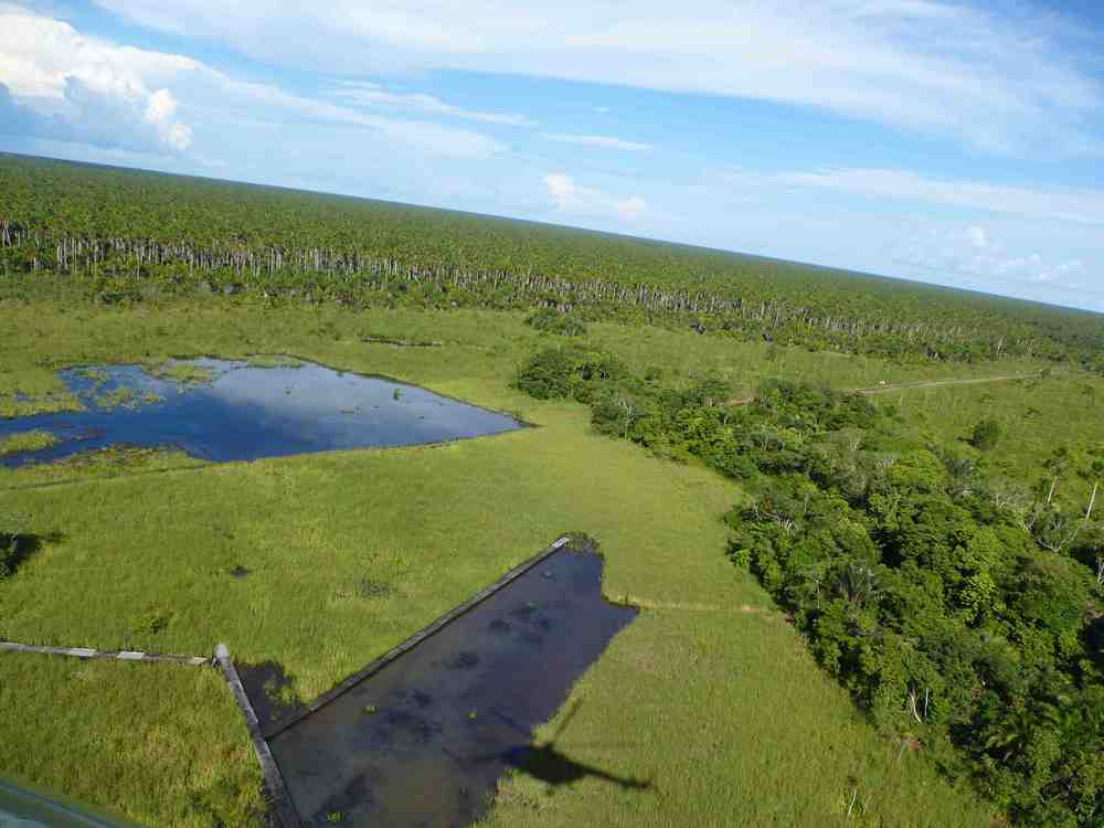 Contaminated Lagoons in Pacaya Samiria