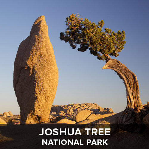 thumb_JoshuaTree.jpg