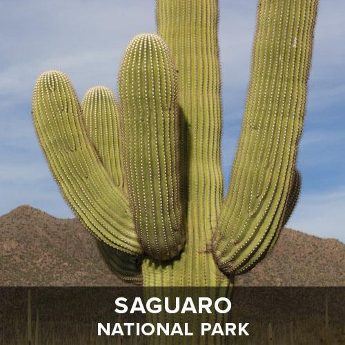 thumb_Saguaro.jpg