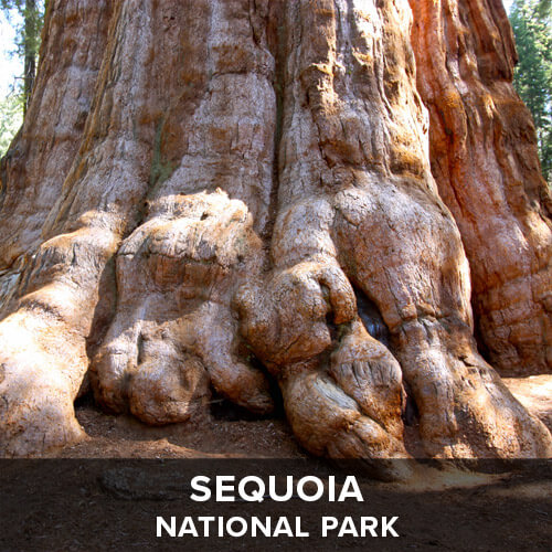 thumb_Sequoia.jpg
