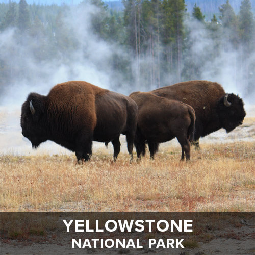 thumb_Yellowstone.jpg